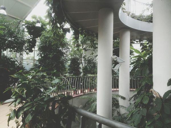 Minsk botanical garden