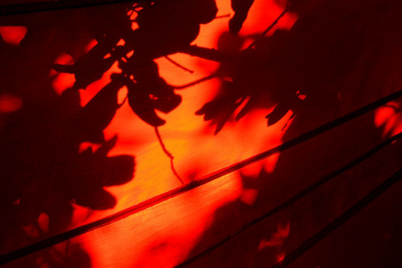shadow, red, no people, night, indoors, close-up, maple leaf, branch, nature