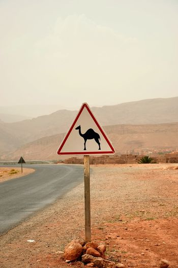 Camels on the road Camel Morocco Africa Letter Sign Desert Edge Of The World Road Traveling Travel Photography