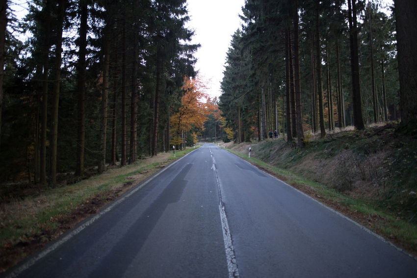 Beauty In Nature Cold Day Forest Front View Frontal Green Green Color Grey Growth Landscape Nature No People Orange Outdoors Point And Shoot Point Of View POV Road Scenics Summer Sun The Way Forward Tree Tree Trunk