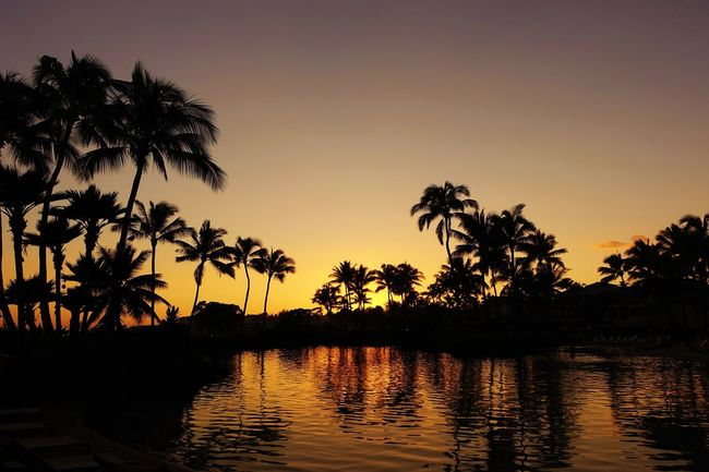Breathtaking Breathtaking View Hawaii Hawaii Sunset Holidays Kauai Resort Hotel Vacations Amazing Amazing Nature Beach Beach Day Beauty In Nature Breathtaking Sunset Island Kauai Hawaii Nature Palm Tree Reflection Resort Silhouette Sky Sunset Tree Water