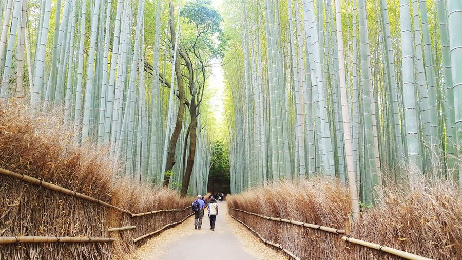 In the big bamboo jungle Bamboo Forest Bamboo Forest Amazing Green Color Fresh Morning Good Japan Traveling Travel Holiday Vacation Refresh Plant Garden Park Nature Human Two Study