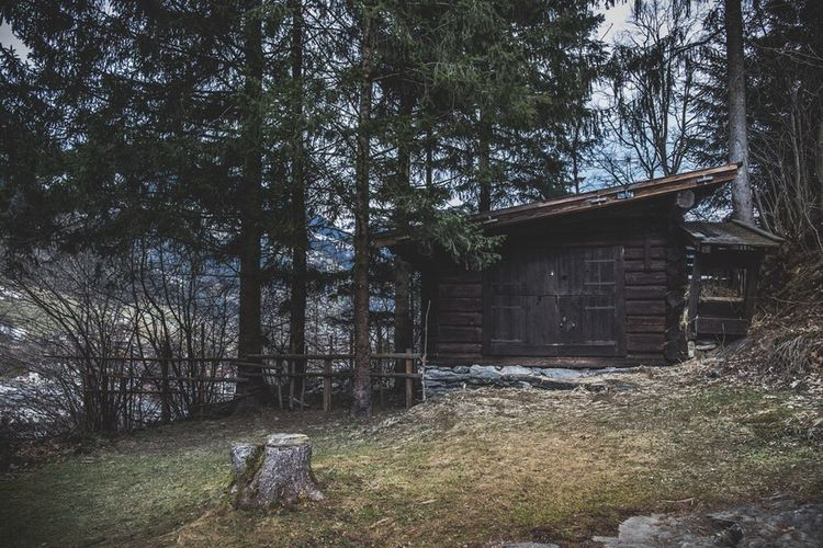 Tree Built Structure Outdoors Architecture Day No People Nature Cabin In The Woods Cabin Wood WoodLand Farmhouse House Alps