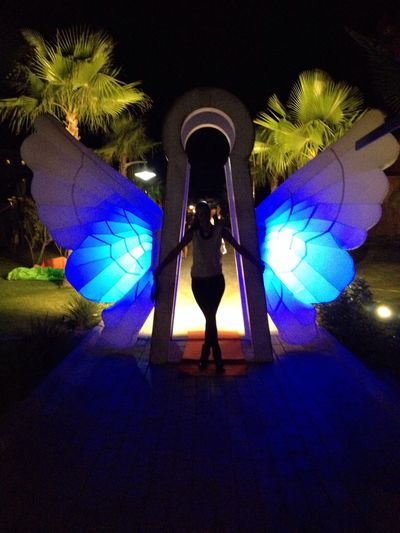 Beautiful Party Holiday Butterfly