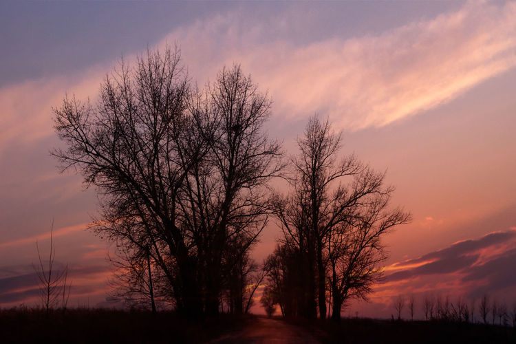 Trees against sky during sunset