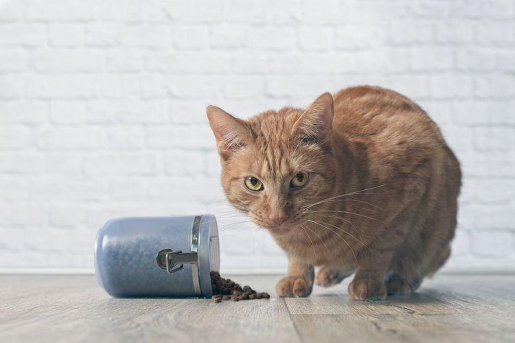 Portrait of cat having food on hardwood floor