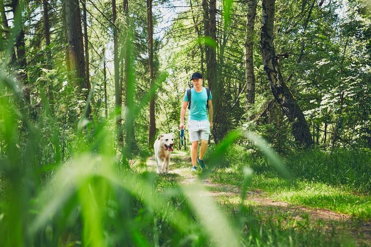 Young man walking with his dog (labrador retriever) in forest. Summer time and vacations theme. Adventure Dog Dogslife Footpath Forest Forestwalk Hiking Idyllic Journey Labrador Labrador Retriever Loyalty Outdoors Pathway Pets Summer Summertime Sunlight Togetherness Tourism Tourist Trip Vacations Walking Weekend Activities