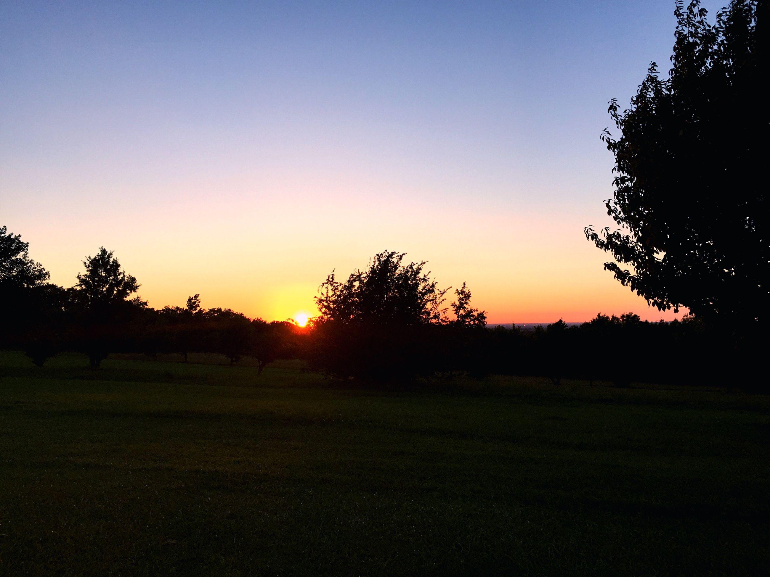 sunset, tranquil scene, tranquility, tree, clear sky, scenics, landscape, beauty in nature, sun, field, nature, orange color, idyllic, growth, sky, grass, non-urban scene, outdoors, no people, non urban scene, remote, blue, dark, outline, majestic, rural scene, horizon over land