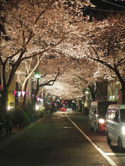 #cherryblossom Bare Tree City City Life City Street Day Diminishing Perspective Empty Growth Illuminated Land Vehicle Mode Of Transport Nature No People Outdoors Parked Parking Road Sky Stationary The Way Forward Transportation Tree Vanishing Point