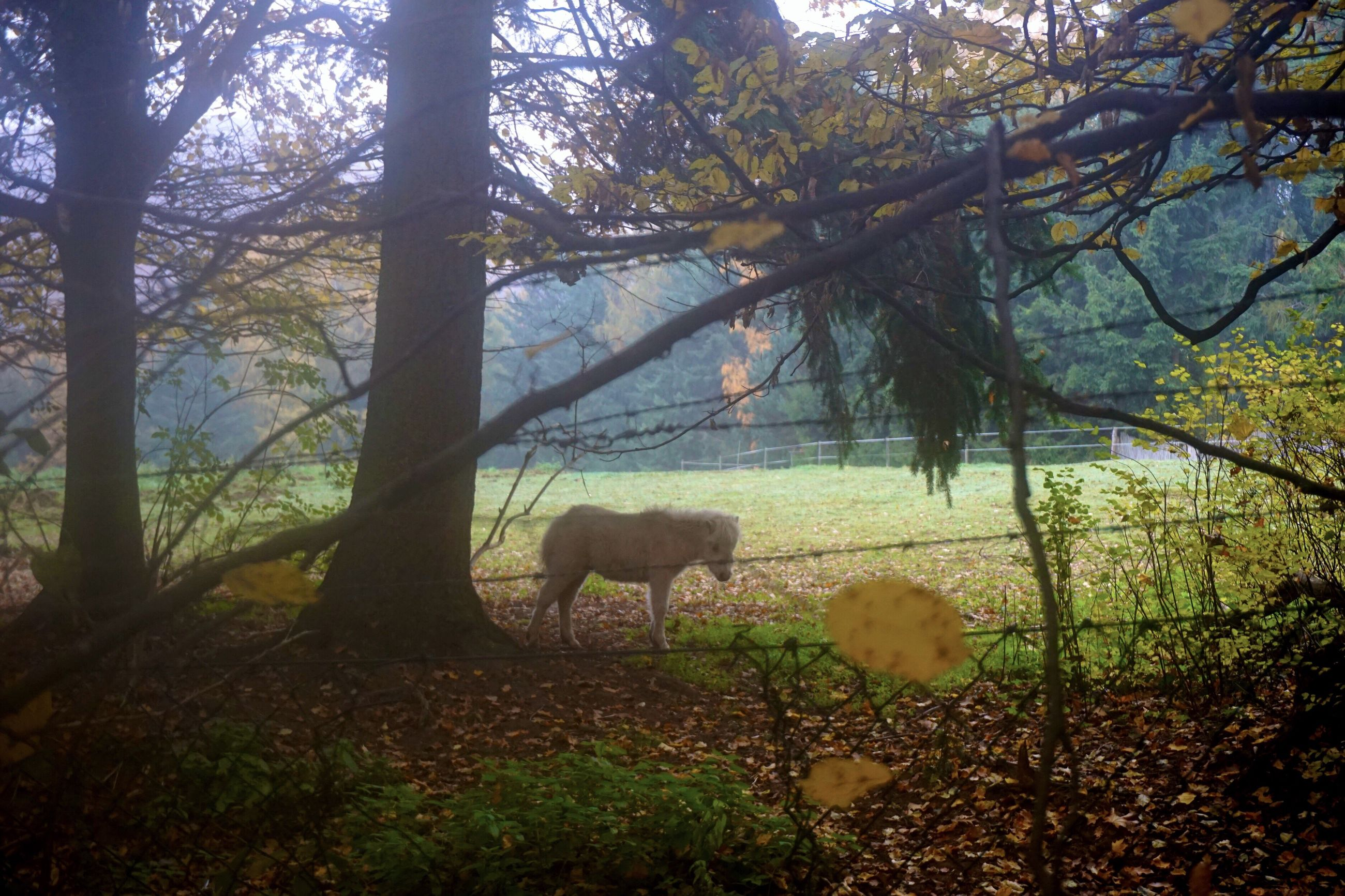 tree, animal themes, nature, no people, domestic animals, livestock, mammal, beauty in nature, day, outdoors, sky