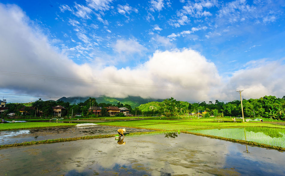 Morning with green. Accidents And Disasters Beauty In Nature Cloud Clouds And Sky Day Environment Grass Green Color Harvest Landscape Natural Disaster Nature Outdoors People Scenics Sky Social Issues Tree Vietnam Water