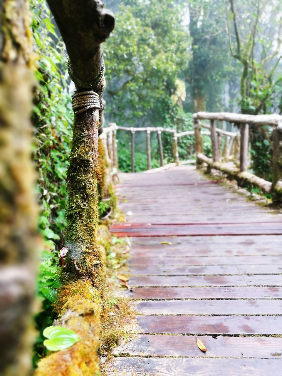nature, tree, growth, wood - material, tree trunk, day, no people, outdoors, railing, the way forward, tranquility, beauty in nature, tranquil scene, forest, close-up