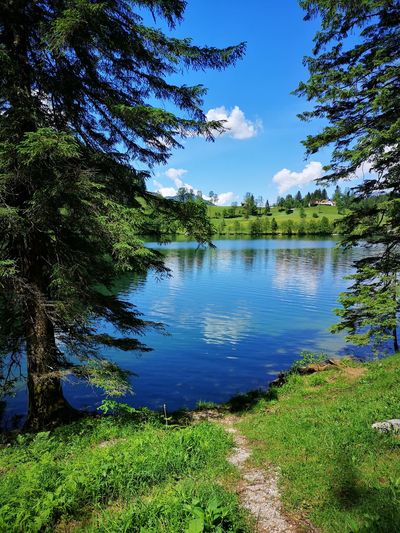 lake water nature Tree Water Lake Reflection Sky Grass Plant Green Color
