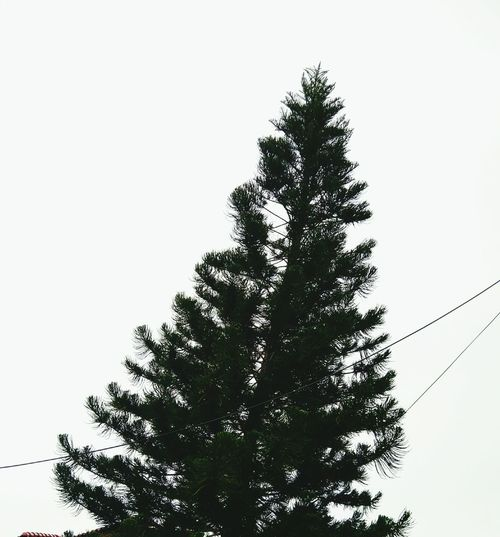 Tree in