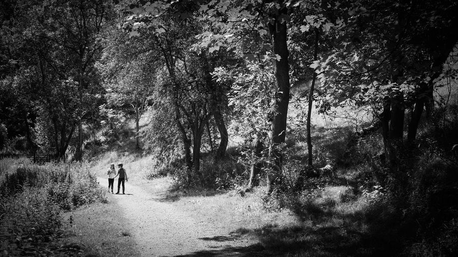 Rear view of people walking on street amidst trees in forest