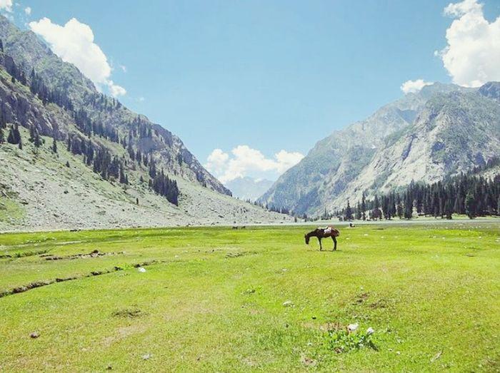 Triptmania Swaat Valley Beauty In Nature Mahodand Village Pakistani Village