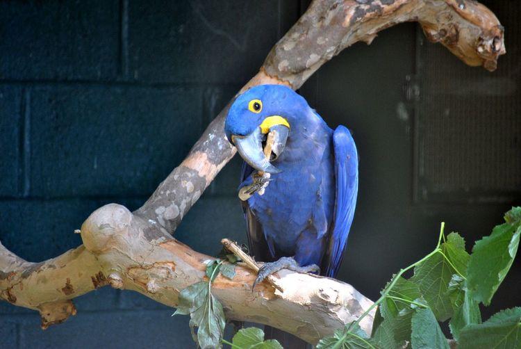 Close-up of bird perching on blue