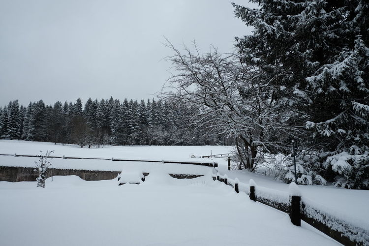 Snow Cold Temperature Winter Tree Plant Covering Beauty In Nature Tranquility Nature No People White Color Scenics - Nature Tranquil Scene Sky Day Land Field Outdoors Non-urban Scene Snow Covered Idyllic Winter