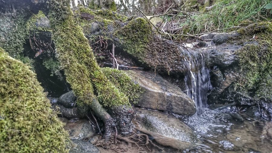 Moss Mossporn Water_collection Stream Brook Small Waterfall Mossy Mossy Tree Roots Water Moss Roots Of Life Small Things Sony Xperia Z3 Naturelovers