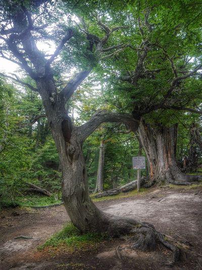 Carol como no te iba a recordar ? A cada rato 😘 EyeEm Nature Lover Parque Nacional Tierra Del Fuego Trees Tree From My Point Of View Showcase: February Ushuaïa