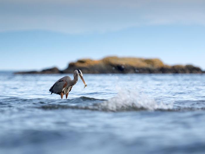 Heron on beach against sky