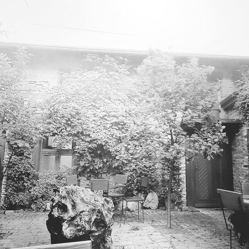 Black And White Summer Garden Garden Photography Builders Nature Tree No People Beauty In Nature Day