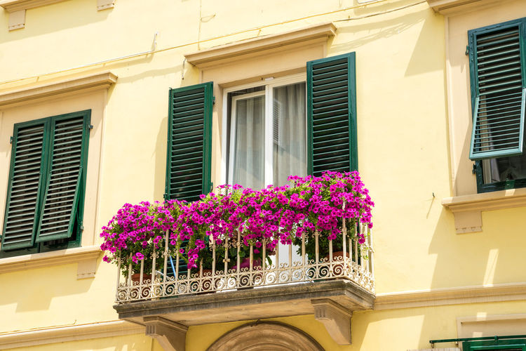 Nature Plants Summer Italy Tuscany Architecture Built Structure Flower Flowering Plant Window Building Exterior Building Plant Pink Color No People Low Angle View Day Growth Freshness Residential District Outdoors House Beauty In Nature Sunlight Purple