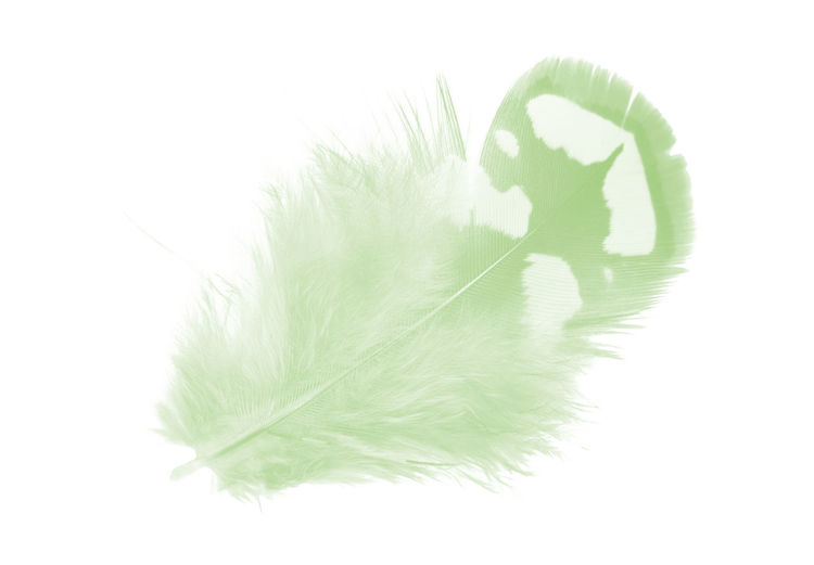 Studio Shot Green Color White Background Indoors  Close-up Cut Out No People Leaf Plant Part Feather  Nature White Color Softness Vertebrate Plant High Angle View Body Part Leaves