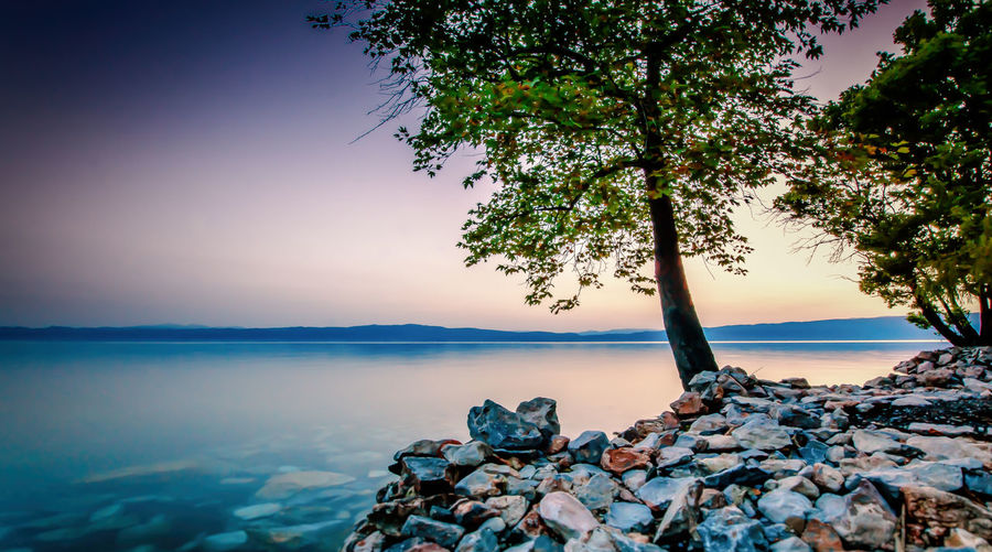 --Capturing the moment 2-- Calm Horizon Over Water Lake Lake View Lakeshore Landscape Macedonia Nature No People Ohrid Rock Rock - Object Sky Tranquil Scene Tranquility Tree Tree Trunk Water