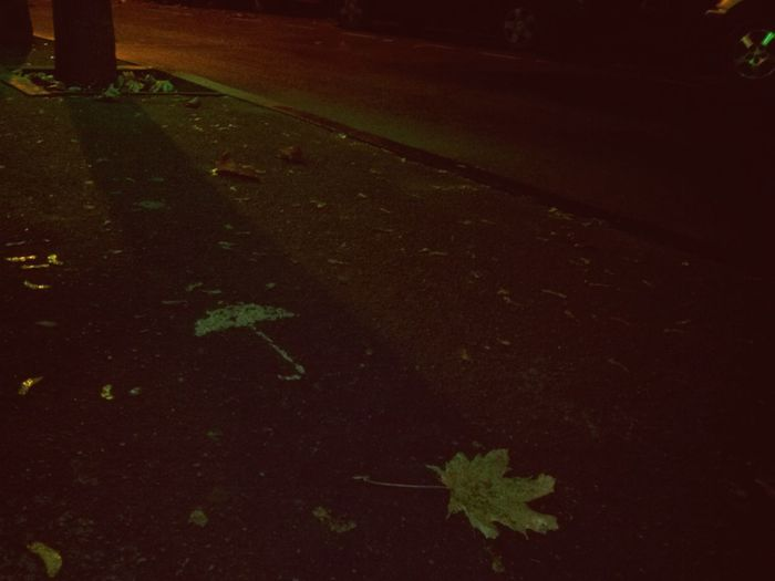 Streetphotography Street Strolling Streetart Umbrella Leaf Autumn Memories Toss And Turn Night No People Outdoors Nature Tranquility Scenery