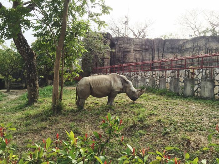 犀牛 Rhinoceros Zoo Zoo Animals