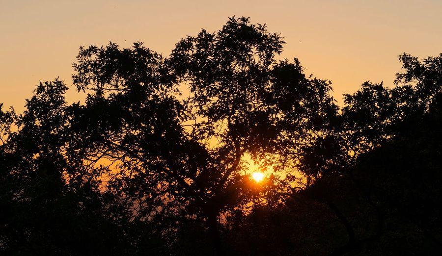 Orange sun Sky