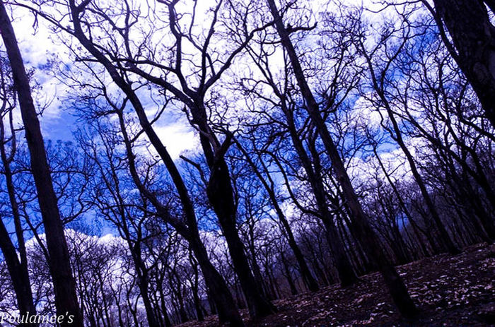 Blue Cloud Nature Outdoors Season  Sky Tree Winter