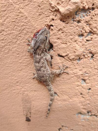 EyeEm Selects Sand Dune Sand Desert Reptile Pets Beach Bird Arid Climate Animal Themes Close-up
