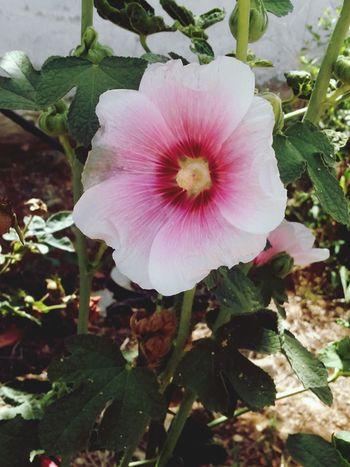Nature <3  Flowers First Eyeem Photo