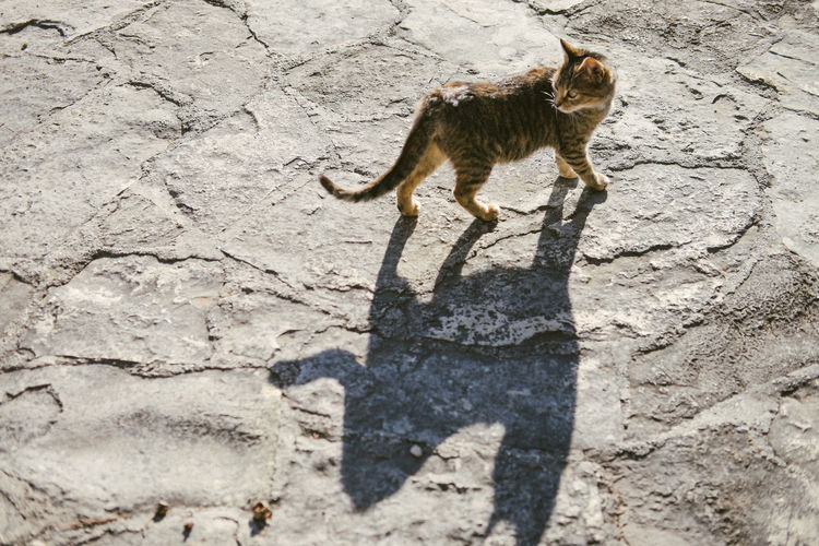 Animal Animal Themes One Animal Mammal Animal Wildlife Shadow Nature No People Sunlight Land Day Outdoors Feline Domestic Animals Standing Close-up Cat Split Animals