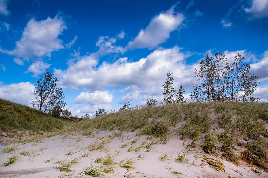 beautiful beach landscape in Michigan USA Sky Plant Cloud - Sky Beauty In Nature Scenics - Nature Tree Non-urban Scene Nature Tranquil Scene Land Tranquility Environment No People Landscape Day Blue Growth Grass Outdoors Remote Marram Grass Great Lakes Dunes Michigan USA Cloudy Sky