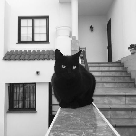 One Animal Looking At Camera Domestic Cat Animal Themes Portrait Pets Domestic Animals Mammal Feline Sitting Whisker Cat No People Architecture Day Outdoors Good Luck Black Cat Photography Black Cat Blackandwhite Shadow