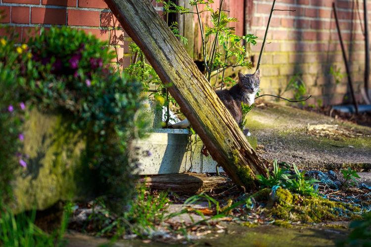 Cat sitting in a yard