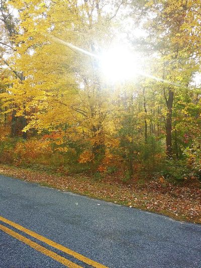 Im weak for sun in trees Nature Outdoors Sun Sunshine Road Leaves Street Trees