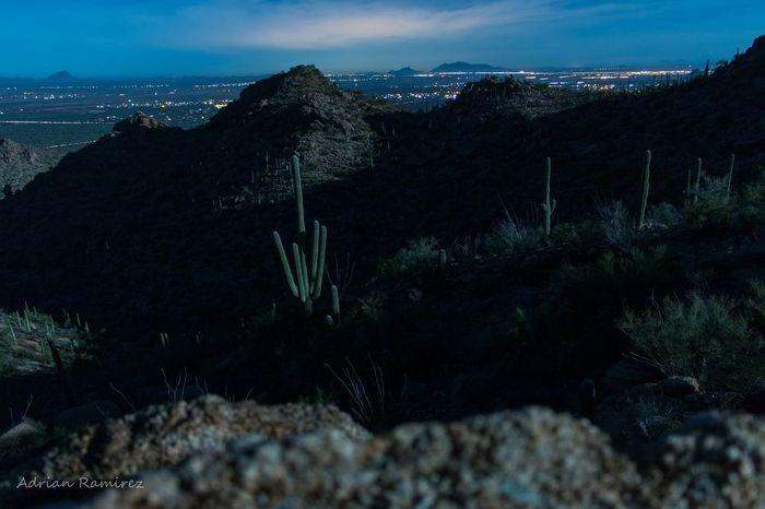 Moonlight Night Sky Desert Arizona Saguaro Landscape Cityscape Langzeitbelichtung Long Exposure Carnegiea Gigantea