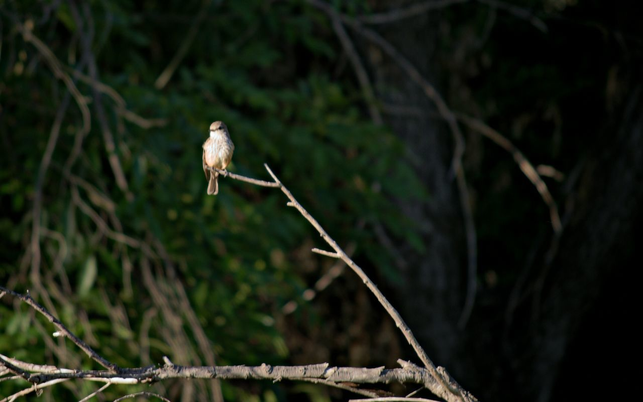one animal, nature, animals in the wild, no people, growth, day, outdoors, animal wildlife, tree, focus on foreground, animal themes, beauty in nature, perching, branch, plant, close-up, bird, toadstool