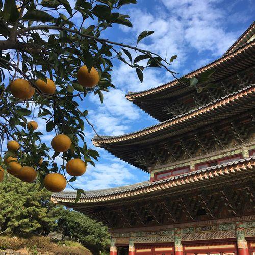 Orange Tree in the Temple First Eyeem Photo