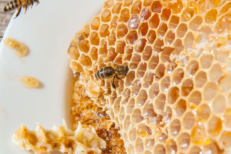 Animal Animal Themes Animal Wildlife Animals In The Wild APIculture Beauty In Nature Bee Beehive Close-up Food Food And Drink Group Of Animals Honey Honey Bee Honeycomb Insect Invertebrate Nature No People Yellow