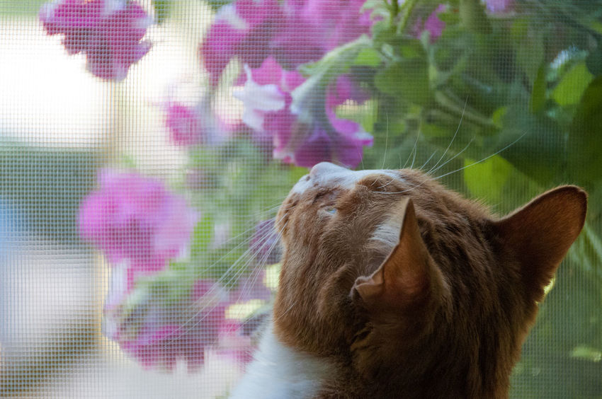 Cat thinking of ... Animal Themes Cat Close-up Day Domestic Animals Flower Indoors  Lookingup Mammal No People One Animal Pets