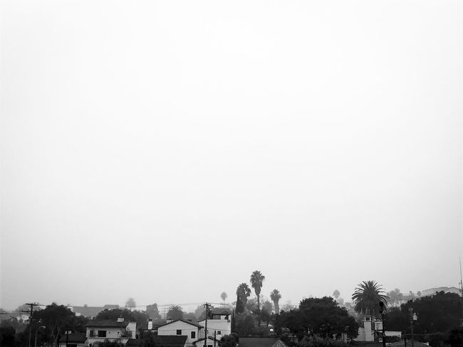 A cloudy day from the balcony at the Olive Street in Santa Barbara, California. Architecture Blackandwhite Building Exterior Calm City Cloudy Copy Space Day Dusk Green Color Misty Outdoors Palms Santa Barbara, CA Sky Skyline Town