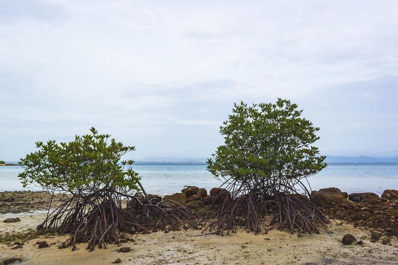 Trees on the rocks at the beach at talu island, prachuap khiri khan, thailand