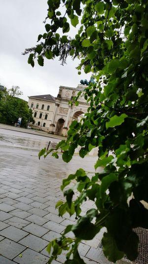 Deutschland Bayern München Siegertor Denkmal Germany Bavaria Munic Munich Baum Tree Blatt Nature's Diversities