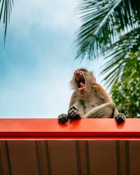 Low angle view of monkey sitting on rooftop