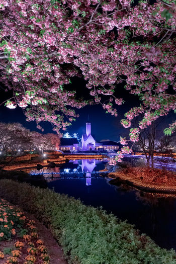 Kawazu Cherry Blossom Cherry Tree Mie Prefecture Nagashima Resort なばなの里 Cherry Blossom 河津桜 河津櫻 カワヅザクラ EyeEm Best Shots EyeEm Gallery Plant Architecture Water Built Structure Tree Flower Nature Building Exterior Flowering Plant Growth No People Blossom Outdoors Springtime